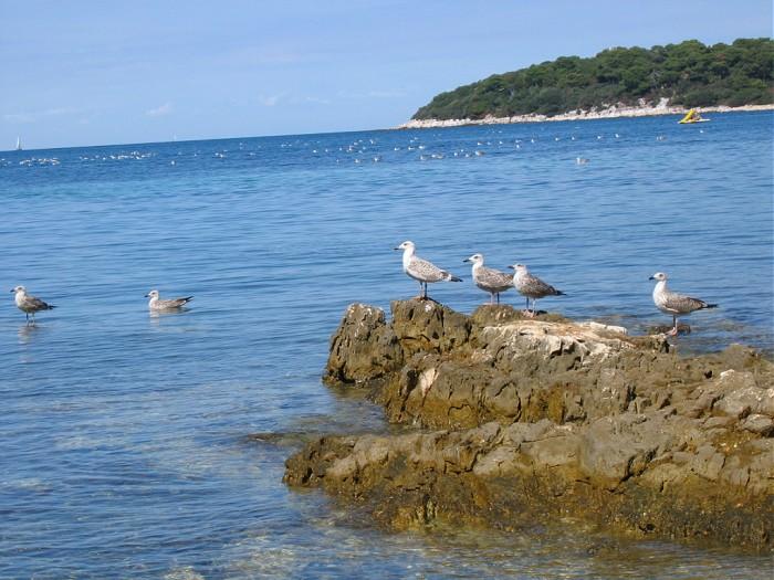 Хорватия полуостров истрия море и